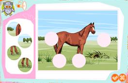 [Kôň – dopĺňanie ilustrácie]
